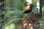 Article First Page: Africa – Birds & Birding: October/N...