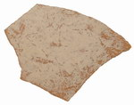 Fragment 2: Elephant Bird Shell Fragments: Subf...
