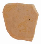 Fragment 5: Elephant Bird Shell Fragments: Subf...