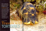 Article First Page: Africa Geographic: November 2007; V...