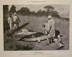 Plate 1: Voyages en Asie et à Madagascar 188...