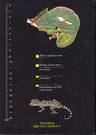 Back Cover: A Field Guide to the Amphibians and...