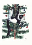 Black-&-White Ruffed Lemur