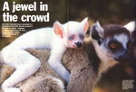 Article First Page: BBC Wildlife: February 1997, Volume...