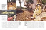 Article First Page: BBC Wildlife: July 2002, Volume 20,...