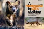 Article: BBC Wildlife: October 2011, Volume ...