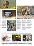 Article: BBC Wildlife: January 2013, Volume ...