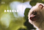 Article First Page: BBC Wildlife: Spring 2019, Volume 3...