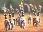 March Page: BBC Wildlife Calendar 2010