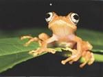 May Page: BBC Wildlife Calendar 2014