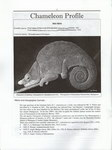 Article First Page: Chameleon Information Network Journ...