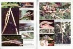 Centrefold: Chameleon Information Network Journ...