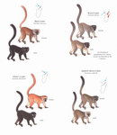 Example Page: Lemurs of Madagascar: Diurnal & Cat...