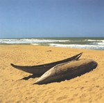 A fisherman's dugout canoes on a deserted beach in East Madagascar