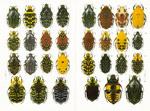 Plates 1 & 2: Faune de Madagascar: 57: Insectes C...
