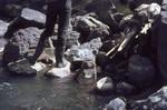 Oxgord traps for aquatic tenrecs