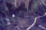 Traps for aquatic tenrecs