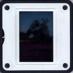 Slide Frame: Tree with many pied crows: Ejeda