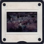 Slide Frame: Vegetable market: Tulear