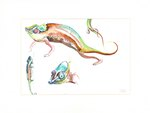Front: Chameleon: Watercolour sketches by ...