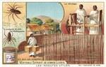 L'Araign�e – Soie de Madagascar