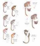 Example Page: Lemurs of Madagascar: Nocturnal Lem...
