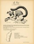 9. Le Vari / 10. Le L�mur Macaco