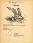 1. La Sterne Caspienne ou Tchegrava / 2. La Sterne Hupp�e ou Sterne de Berg