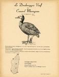 19. Le Dendrocygne Veuf ou Canard Maragnon / 20. Le Dendrocygne Fauve ou Canard siffleur