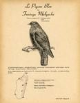 27. Le Pigeon Bleu ou Funingo Malgache / 28. Le Pigeon Vert ou Colombar Austral