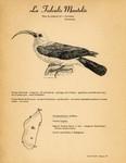 47. La Falculie Mantel�e / 48. Le Zosterops ou Oiseau � lunettes