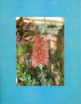 Back Cover: Plantes Médicinales Malgaches: Trad...