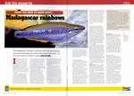 Article: Practical Fishkeeping: Issue 2/Febr...