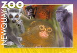 Primates Postcard
