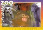 Front: Primates Postcard: Ring-tailed Lemu...