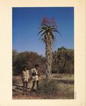 Back: Madagascar: Un sanctuaire de la nat...