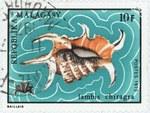Lambis chiragra: 10-Franc Postage Stamp