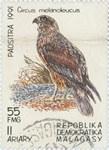 Circus melanoleucus: 55-Franc (11-Ariary) Postage Stamp