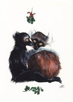 Black Lemur: Eulemur macaco