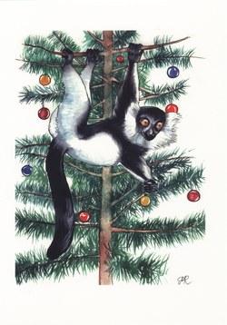 Black-&-White Ruffed Lemur: Varecia variegata