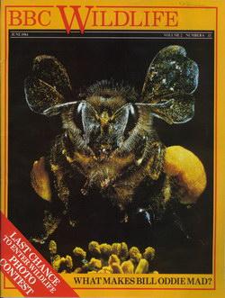 BBC Wildlife: June 1984, Volume 2, Number 6