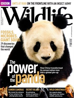 BBC Wildlife: December 2010, Volume 28, Number 13