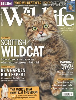 BBC Wildlife: January 2014, Volume 32, Number 1