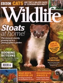 BBC Wildlife: Spring 2019, Volume 37, Number 5
