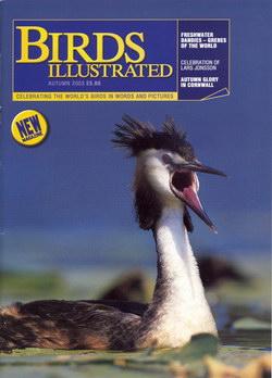 Birds Illustrated: Autumn 2003: Volume 1, Issue 1