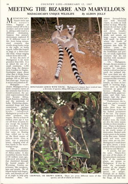 Meeting the Bizarre and Marvellous: Madagascar's Unique Wildlife