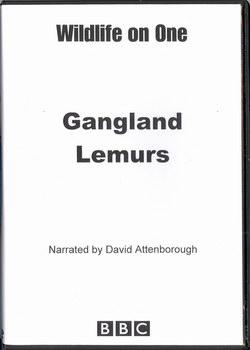 Gangland Lemurs