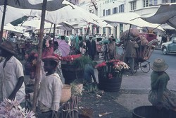 Cut flowers for sale, ny Zoma market: Rue du 26 Juin 1960, Antananarivo
