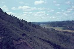 Woods around Ambositra