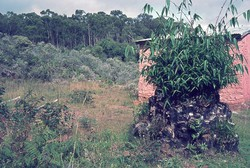 Bamboo stump: Ambositra